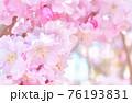 しだれ桜 背景素材 76193831