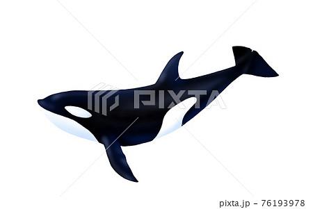 泳ぐシャチのイラスト 76193978