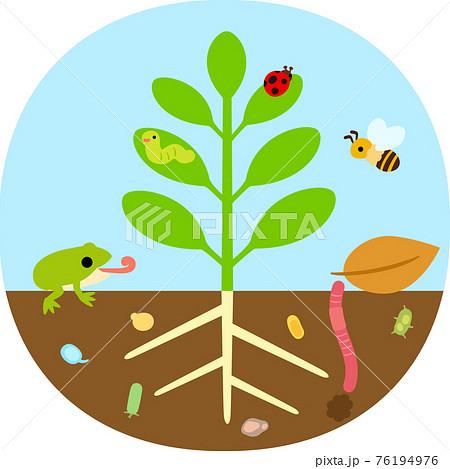 植物と虫や微生物 76194976