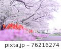 道の脇に咲いている桜とチューリップと紫色の花 76216274