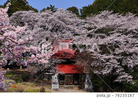 山梨県南アルプス市中野 諏訪神社と桜 76235167