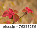 春が来て赤い若葉が生えてきた1 76238256