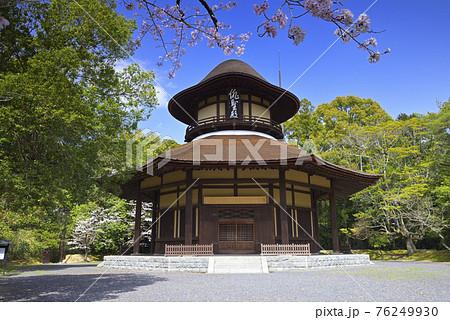伊賀上野城 春の俳聖殿(三重県伊賀市) 76249930