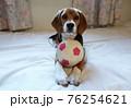おもちゃのサッカーボールとビーグルの子犬 76254621