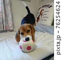 おもちゃのサッカーボールで遊ぶビーグルの子犬 76254624