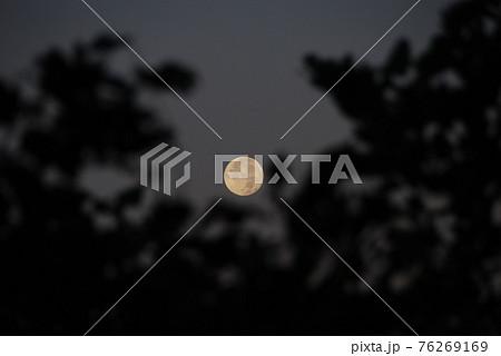 木の葉の間から見る月 76269169