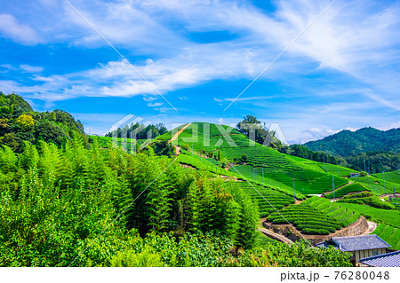 宇治茶の郷 石寺の茶畑 76280048