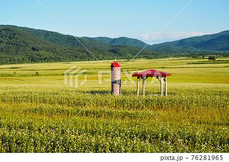 夏の幌加内町 満開のそば畑 76281965