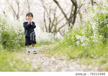 満開に咲いた桜の並木と幼稚園の制服を着た女の子 76312986