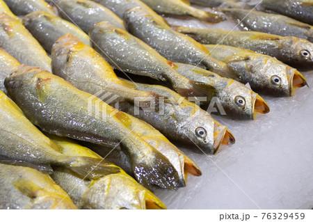 スーパーマーケットで販売されている黄色いニベ 76329459