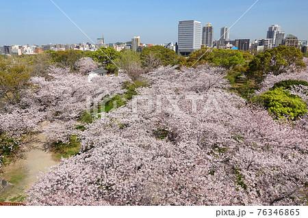 福岡城 舞鶴公園の桜 76346865
