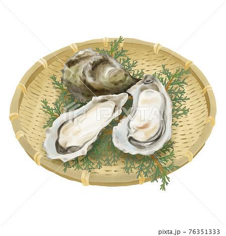 水彩タッチ 竹ざるとヒバの葉の上の殻付き牡蠣 76351333