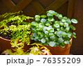 マンションのベランダに植物 グリーンガーデン 76355209