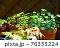 マンションのベランダに植物 グリーンガーデン 76355224