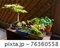 マンションのベランダに植物 寄せ鉢 盆栽 76360558