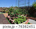 ガーデニング 大空の下、四季を感じるバルコニー 家庭菜園の野菜とバラ 広々グリーンガーデン 76362451