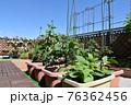 ガーデニング 大空の下、四季を感じるバルコニー 家庭菜園の野菜とバラ 広々グリーンガーデン 76362456
