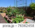 ガーデニング 大空の下、四季を感じるバルコニー 家庭菜園の野菜とバラ 広々グリーンガーデン 76362458