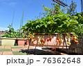 広々バルコニーで家庭菜園 イチゴや夏野菜いっぱい育てよう 76362648
