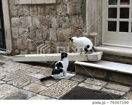 見つめ合う猫|クロアチアのドゥブロヴニクの裏通り 76367190