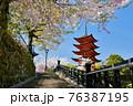 宮島の五重塔と満開の桜 76387195