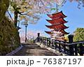 宮島の五重塔と満開の桜 76387197