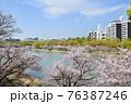 広島の本川の桜並木 76387246
