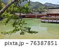 水に浮かぶ厳島神社 76387851