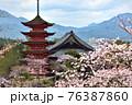 春の厳島神社の五重塔と満開の桜 76387860