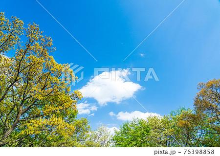 八王子の自然環境 新緑と春の青空 片倉つどいの森公園 76398858