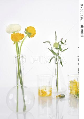 flower and plants in beaker, white background 76400246
