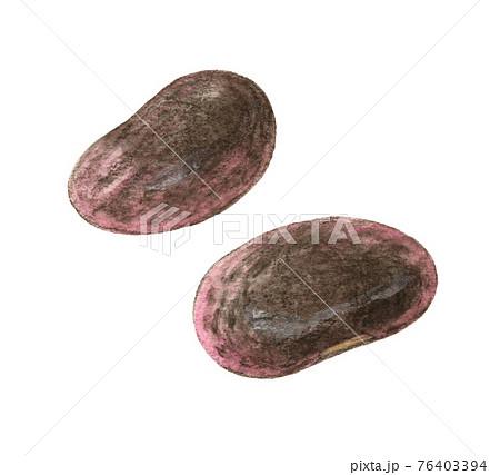 紫花豆2粒 水彩色えんぴつ画 76403394