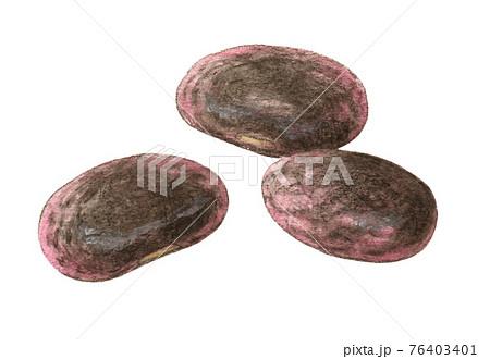 紫花豆3粒 水彩色えんぴつ画 76403401
