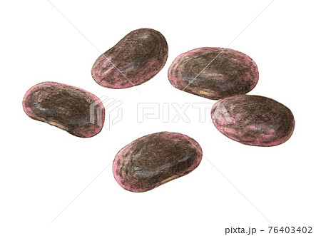 紫花豆 手描き 水彩色えんぴつ画 76403402