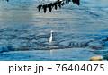 孤独なシロサギ 76404075