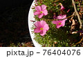 絵画的花 76404076