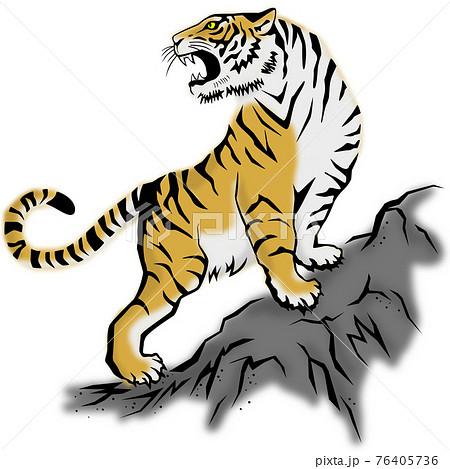 岩山で吠える虎 76405736