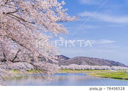 青空と満開の桜 桜吹雪 白石川堤一目千本桜 宮城県大河原町 76406528