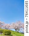 桜満開の丘(三月) 76411685