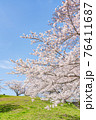 桜満開の丘(三月) 76411687
