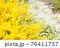 黄色の花 76411737