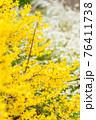 黄色の花 76411738