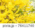 黄色の花 76411740
