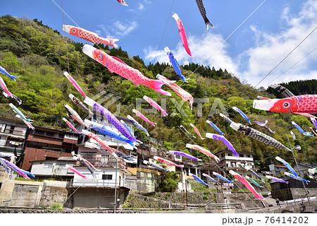 杖立温泉 鯉のぼり祭り 端午の節句 熊本県阿蘇郡小国町  76414202