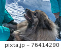 A joyful dog of the Keeshond breed meets its owner and holds out his paws 76414290