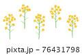 黄色い菜の花の手描きイラスト なのはな ナノハナ  76431798