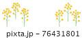 黄色い菜の花の手描きイラスト なのはな ナノハナ  76431801