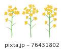 黄色い菜の花の手描きイラスト なのはな ナノハナ  76431802