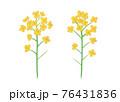 黄色い菜の花の手描きイラスト なのはな ナノハナ  76431836