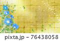 青い朝顔が咲く金屏風の背景の夏のイメージ 76438058